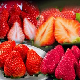 厳選した3種と新品種イチゴを一度に楽しめる福袋!