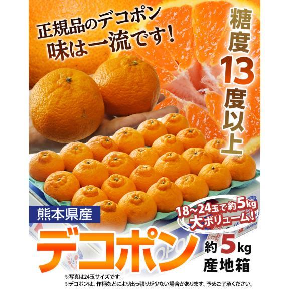 『デコポン』 熊本県産柑橘 約5kg 18~24玉 産地箱入 ※常温 送料無料02
