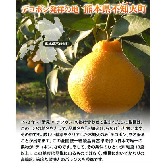 『デコポン』 熊本県産柑橘 約5kg 18~24玉 産地箱入 ※常温 送料無料03