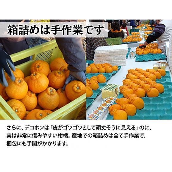 『デコポン』 熊本県産柑橘 約5kg 18~24玉 産地箱入 ※常温 送料無料04