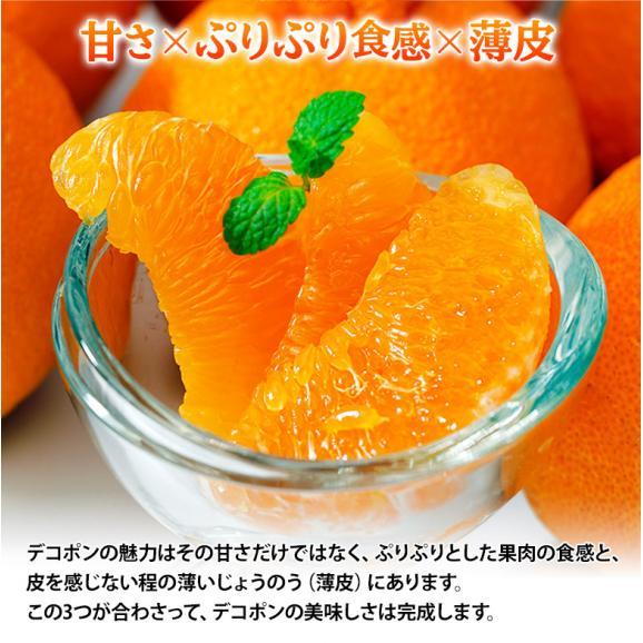 『デコポン』 熊本県産柑橘 約5kg 18~24玉 産地箱入 ※常温 送料無料06