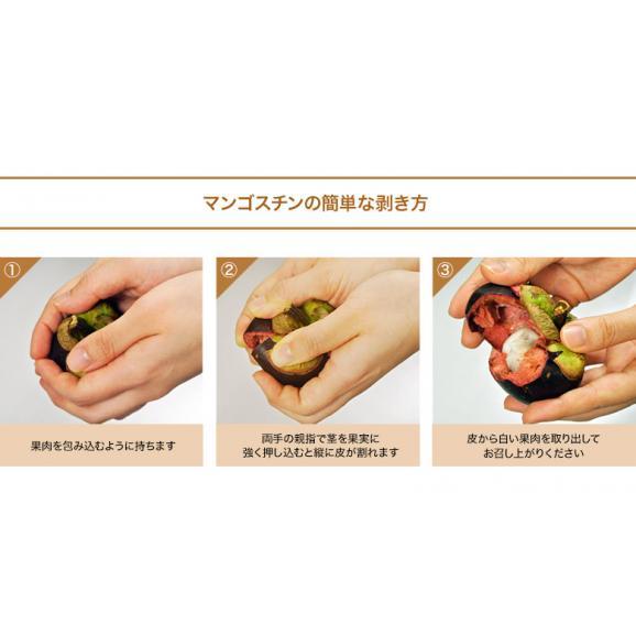 マンゴスチン タイ産 Mサイズ12玉 送料無料04