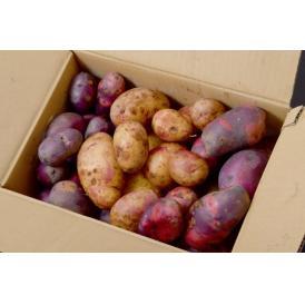 訳あり 送料無料 じゃがいも 長崎 【雲仙うららかファーム】 幻のジャガイモ3種混載 「マゼラン・彦星・ペチカ」 サイズ混合 計約3.5kg