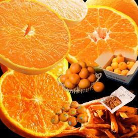 柑橘 せとか デコポン オア 芋けんぴ 決算特別!柑橘3種福袋+おまけ 合計約5kg 送料無料