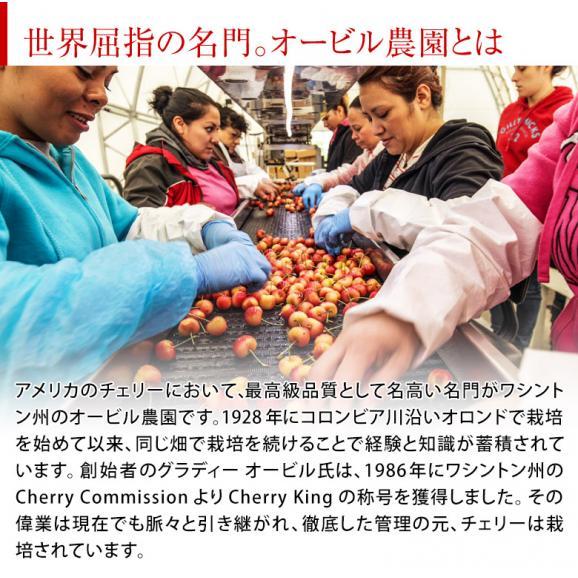 オービル農園の『レーニアチェリー』 超大粒 直径25mm~ 約1kg アメリカ・ワシントン州産 GEE WHIZ レイニア ※冷蔵 送料無料02