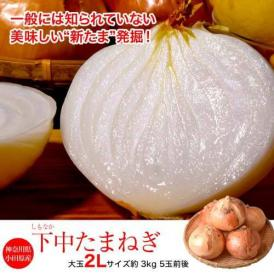 玉ねぎ タマネギ 玉葱 神奈川県小田原産 下中たまねぎ 約3kg 5玉前後 常温 送料無料