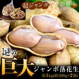 らっかせい ピーナッツ 千葉県成田産 高梨さんの謎の巨大ジャンボ落花生 約1kg(約500g×2) 冷蔵 産地直送