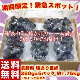 ぶどう 葡萄 ブドウ 巨峰 訳あり 長野県 種あり巨峰 約350g×5パック 約1.75kg 送料無料