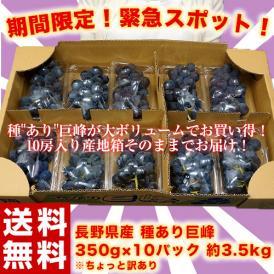 ぶどう 葡萄 ブドウ 巨峰 訳あり 長野県 種あり巨峰 約350g×10パック 約3.5kg 送料無料