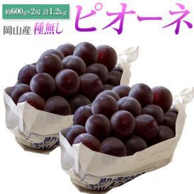 ぶどう ブドウ 葡萄 岡山県産 種無し ピオーネ 2房 約1.2kg (600g×2房) 送料無料