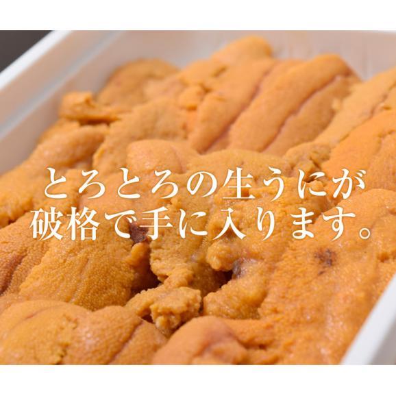 うに ウニ 雲丹 チリ産 天然うに 生食用 100g 冷凍同梱可能02