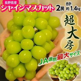 葡萄 ぶどう シャインマスカット 長野県産 シャインマスカット 2房 特大サイズ 合計約1.4kg 送料無料