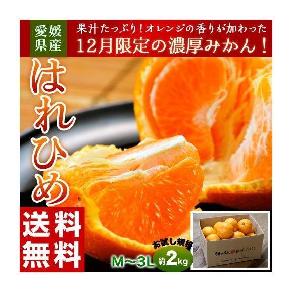 みかん ミカン 蜜柑 オレンジ 柑橘 愛媛県産 はれひめ お試し用 約2kg M~3L 送料無料01