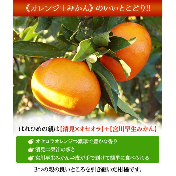 みかん ミカン 蜜柑 オレンジ 柑橘 愛媛県産 はれひめ お試し用 約2kg M~3L 送料無料02