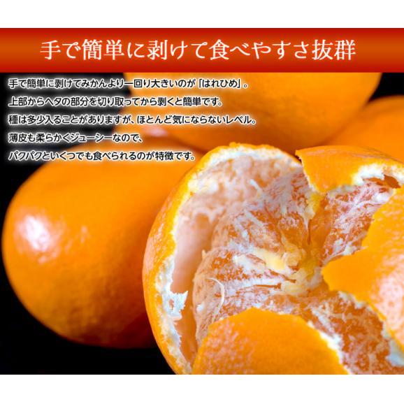 みかん ミカン 蜜柑 オレンジ 柑橘 愛媛県産 はれひめ お試し用 約2kg M~3L 送料無料03