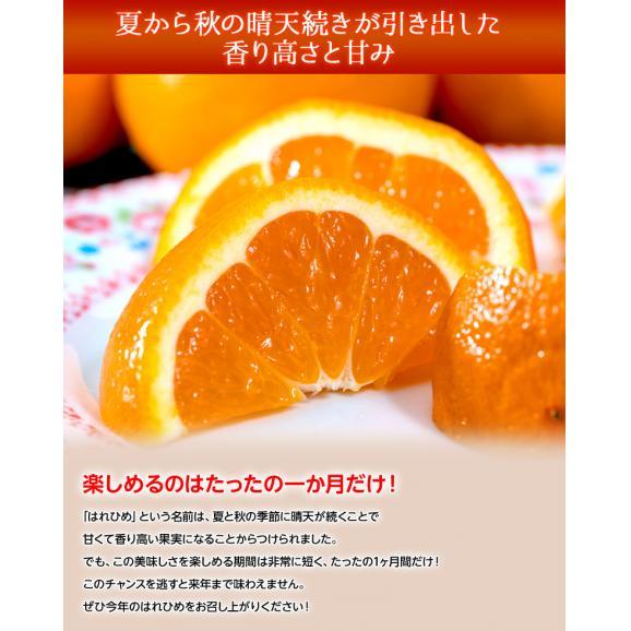みかん ミカン 蜜柑 オレンジ 柑橘 愛媛県産 はれひめ お試し用 約2kg M~3L 送料無料04