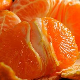 みかん 柑橘 訳あり品 新品種 香川県産 西南のひかり 約5kg (M~3L) 送料無料