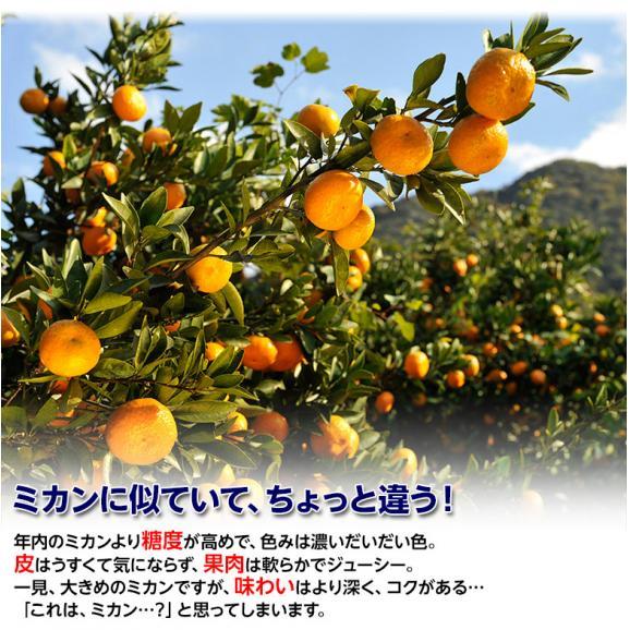 みかん 柑橘 訳あり品 新品種 香川県産 西南のひかり 約5kg (M~3L) 送料無料02