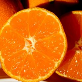 みかん ミカン 蜜柑 柑橘 糖度12度以上 熊本県 夢の恵 お試し 約2kg Sサイズ 送料無料 常温