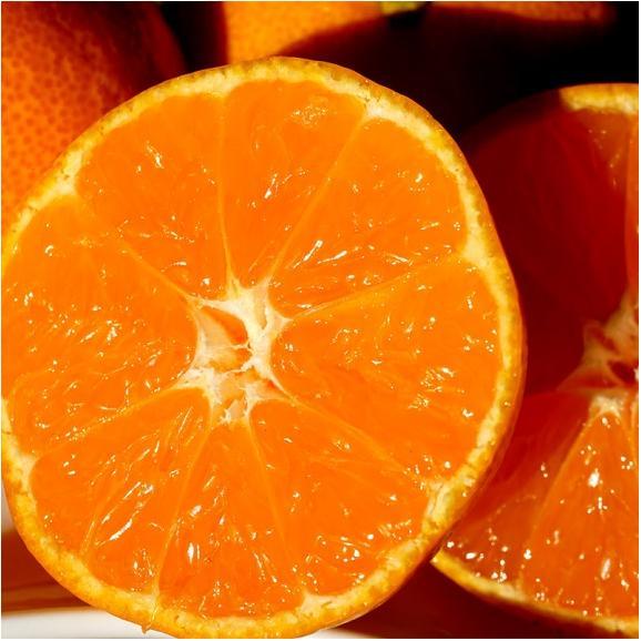 みかん ミカン 蜜柑 柑橘 糖度12度以上 熊本県 夢の恵 お試し 約2kg Sサイズ 送料無料 常温01