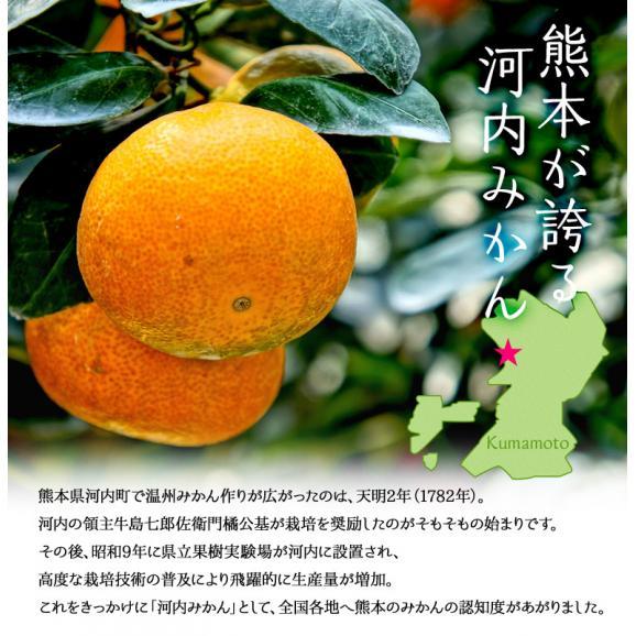 みかん ミカン 蜜柑 柑橘 糖度12度以上 熊本県 夢の恵 お試し 約2kg Sサイズ 送料無料 常温02