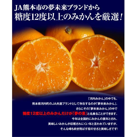 みかん ミカン 蜜柑 柑橘 糖度12度以上 熊本県 夢の恵 お試し 約2kg Sサイズ 送料無料 常温03