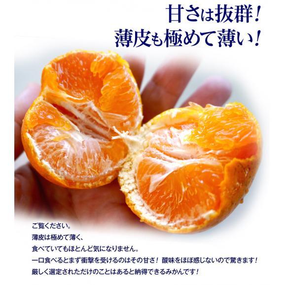 みかん ミカン 蜜柑 柑橘 糖度12度以上 熊本県 夢の恵 お試し 約2kg Sサイズ 送料無料 常温04