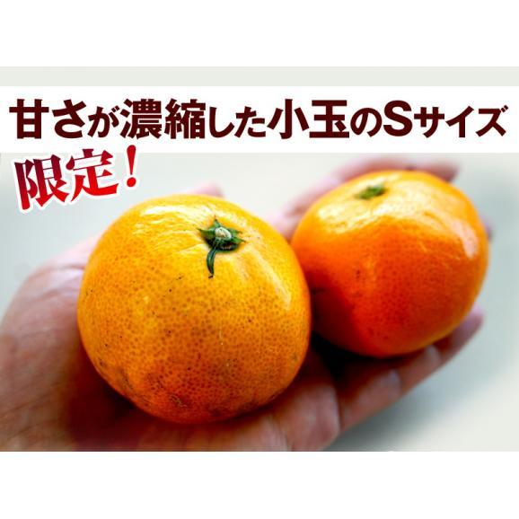 みかん ミカン 蜜柑 柑橘 糖度12度以上 熊本県 夢の恵 お試し 約2kg Sサイズ 送料無料 常温05