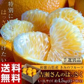 八朔 柑橘 和歌山県産 きみのフルーツのはっさく 手選別品 約4.5kg L-2Lサイズ (15~16玉) 送料無料