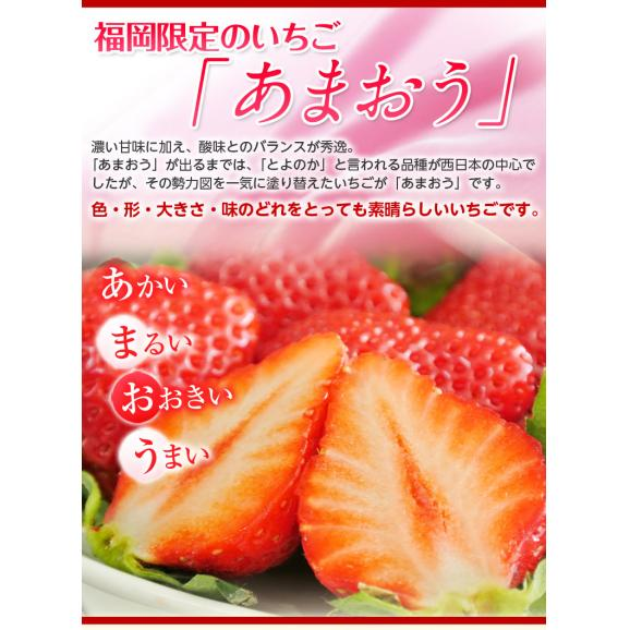 いちご イチゴ 苺 メロン マスクメロン プレミアムフルーツセット(クラウンメロン 1玉 約1kg + あまおう 約270g×2パック) ※冷蔵 送料無料03