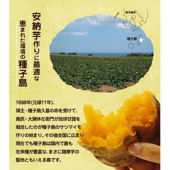 安納芋 干し芋 芋 ドライフルーツ 焼き芋の干し芋 種子島産 100g×10袋 まとめ買いお得セット 送料無料02
