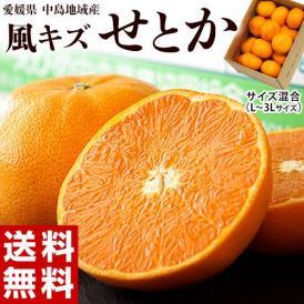 せとか 柑橘 【2箱買えば1箱オマケ】愛媛県 中島地域の訳ありせとか M~3L 約1.5kg 送料無料