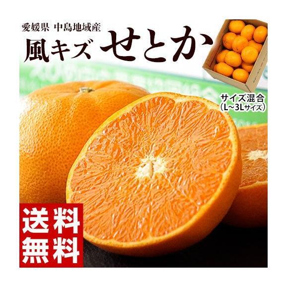 せとか 柑橘 【2箱買えば1箱オマケ】愛媛県 中島地域の訳ありせとか M~3L 約1.5kg 送料無料01