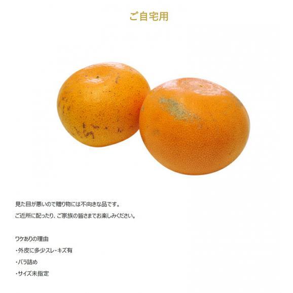 せとか 柑橘 【2箱買えば1箱オマケ】愛媛県 中島地域の訳ありせとか M~3L 約1.5kg 送料無料02