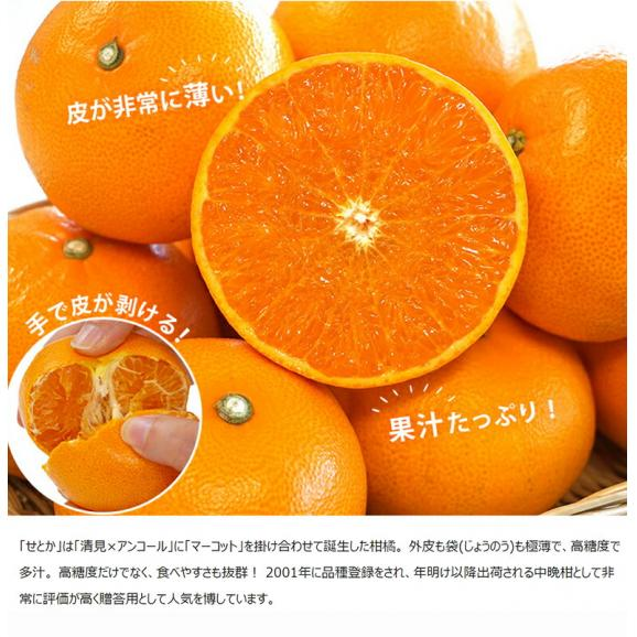 せとか 柑橘 【2箱買えば1箱オマケ】愛媛県 中島地域の訳ありせとか M~3L 約1.5kg 送料無料03