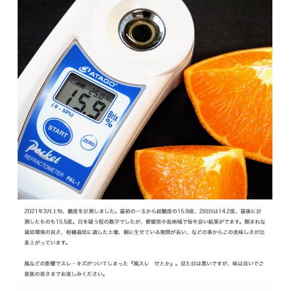 せとか 柑橘 【2箱買えば1箱オマケ】愛媛県 中島地域の訳ありせとか M~3L 約1.5kg 送料無料04