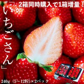 いちご イチゴ 苺 【2箱購入で1箱増量】佐賀県産 いちごさん 2L~5L 約240g×2パック 送料無料 ※冷蔵