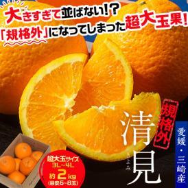 オレンジ 柑橘 訳あり 愛媛県三崎産 規格外 清見 超大玉3L~4Lサイズ(目安6~8玉) 約2kg 送料無料 常温