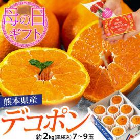母の日 熊本県産 糖度13度以上 デコポン 約2kg(風袋込) 7~9玉 化粧箱 カーネーション(造花)+メッセージカード付※常温 送料無料
