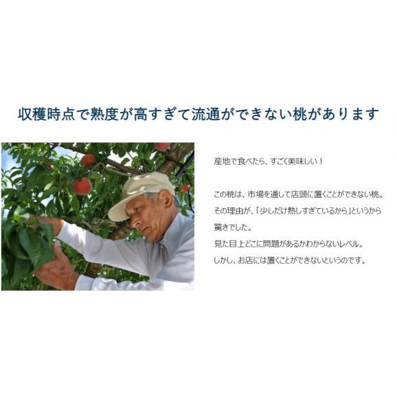 山梨県産 春日居共選所の訳あり「熟れ桃」 約1.3kg×2箱 ※常温 送料無料03