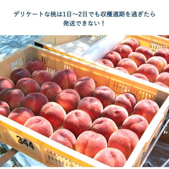 山梨県産 春日居共選所の訳あり「熟れ桃」 約1.3kg×2箱 ※常温 送料無料04