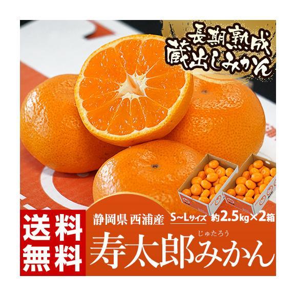 静岡県産 寿太郎みかん S~Lサイズ 約2.5kg×2箱 産地箱 ※常温 送料無料01