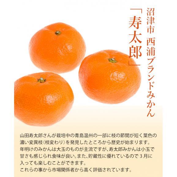 静岡県産 寿太郎みかん S~Lサイズ 約2.5kg×2箱 産地箱 ※常温 送料無料02