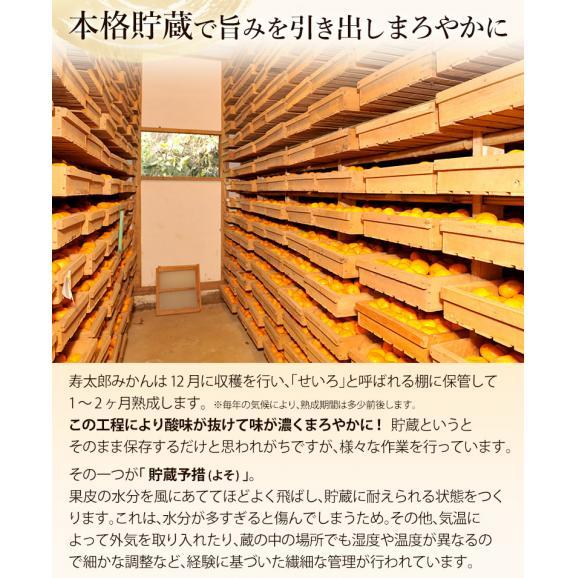 静岡県産 寿太郎みかん S~Lサイズ 約2.5kg×2箱 産地箱 ※常温 送料無料04