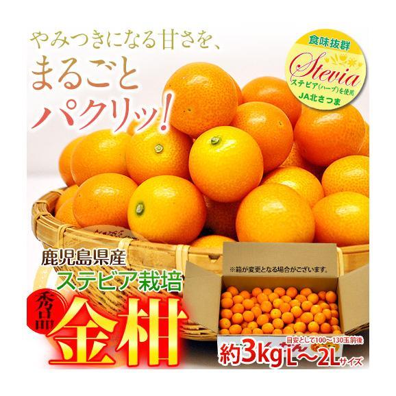 鹿児島県産 ステビア栽培 きんかん 秀品 L~2L 約3kg ※常温 送料無料01