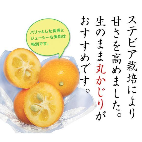鹿児島県産 ステビア栽培 きんかん 秀品 L~2L 約3kg ※常温 送料無料02