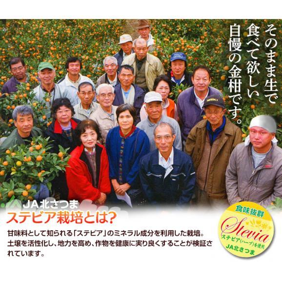 鹿児島県産 ステビア栽培 きんかん 秀品 L~2L 約3kg ※常温 送料無料03