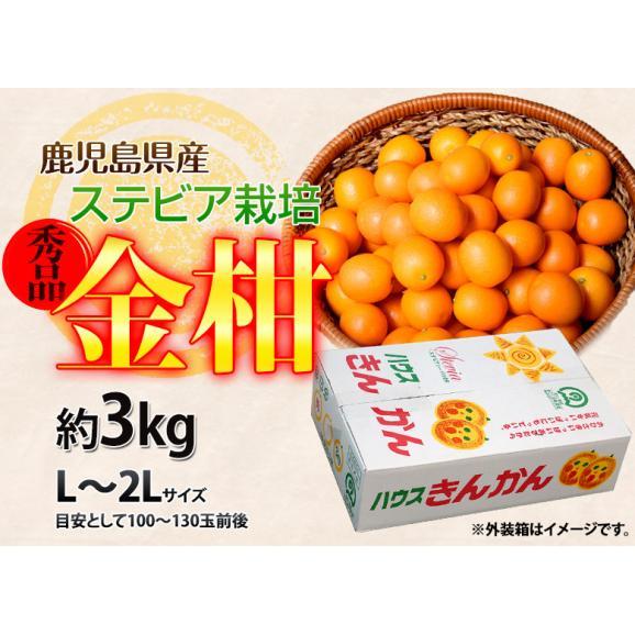 鹿児島県産 ステビア栽培 きんかん 秀品 L~2L 約3kg ※常温 送料無料04