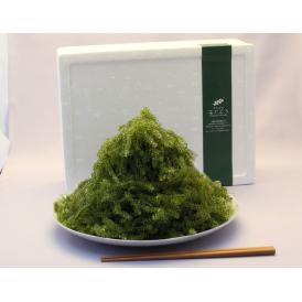 【産地応援価格】沖縄県産『海ぶどう』約1kg シークヮーサーのタレ20個付き ※常温 送料無料
