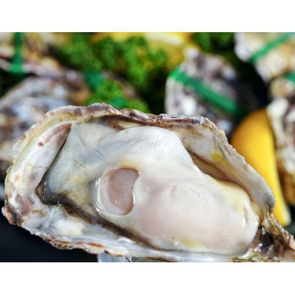 【賞味間近最短2021年10月】瀬戸内海産 『殻付き牡蠣』 生食用 小粒Sサイズ 2ダース 6個入×4袋 (1個:55~64g) ※冷凍 送料無料03